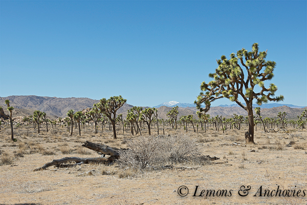 Joshua Tree National Park-2
