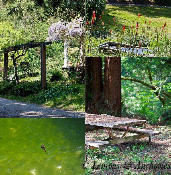Pescadero April 2013-11