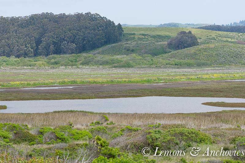 Pescadero April 2013-6