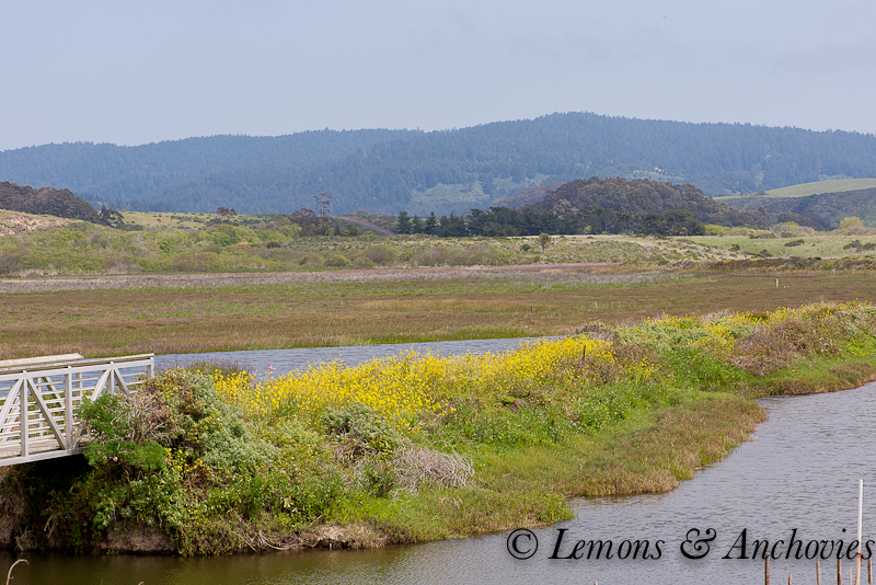 Pescadero April 2013-8
