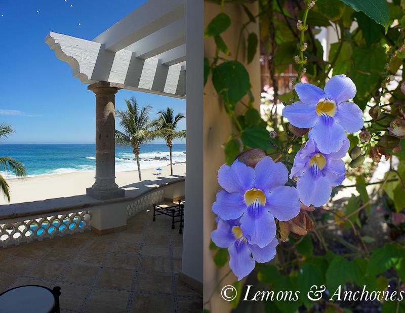Los Cabos, Mexico | http://lemonsandanchovies.com