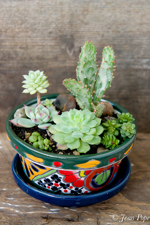 Succulents in a Talavera Pot