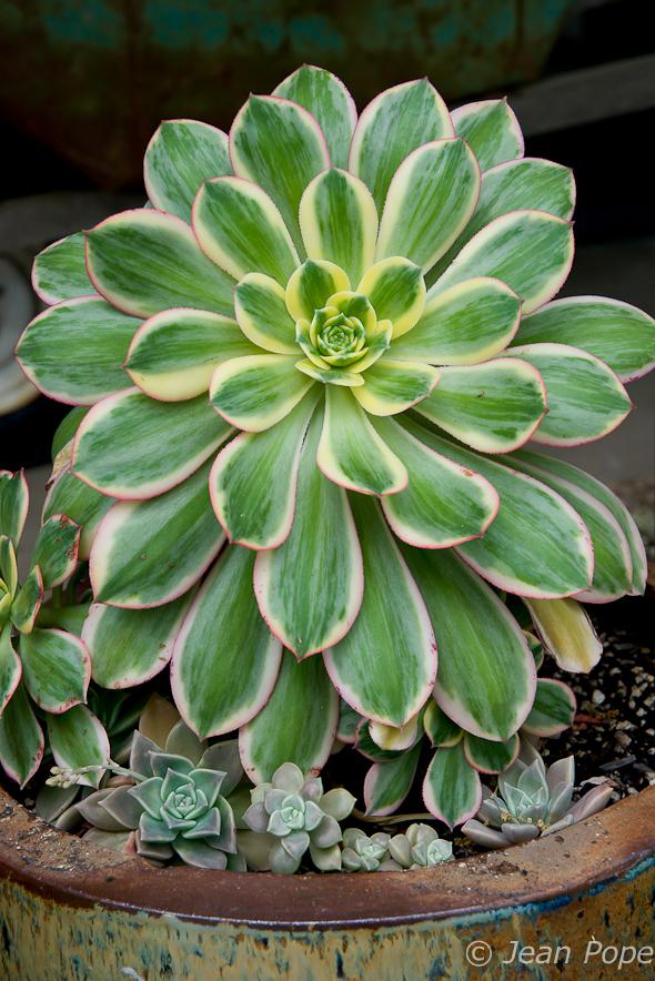 Succulents 031016